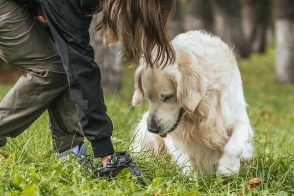 sprzątanie psiej kupy